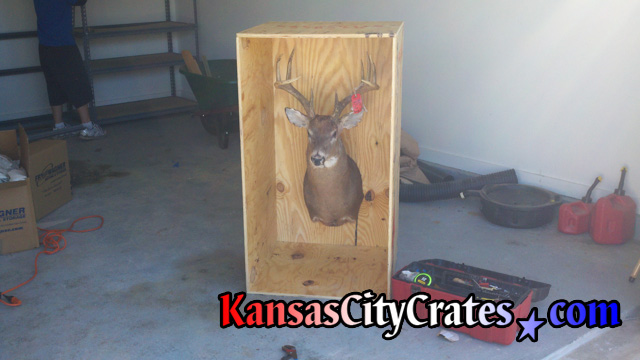 Deer Head Mount >> Kansas City Crates │Crates for Taxidermy and WIld Game ...